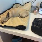 Hummel hilft beim Schreiben